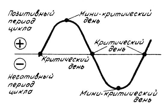 Периоды цикла
