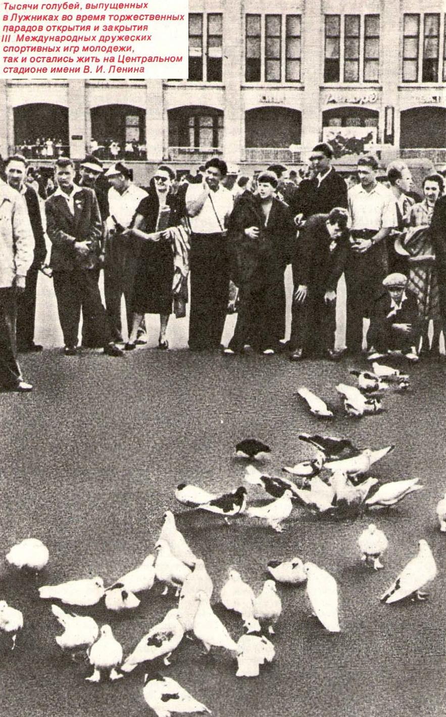 Тысячи голубей остались жить на Центральном стадионе имени В. И. Ленина